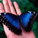 John of God Day 8: Rare Blue Butterfly Sighting!